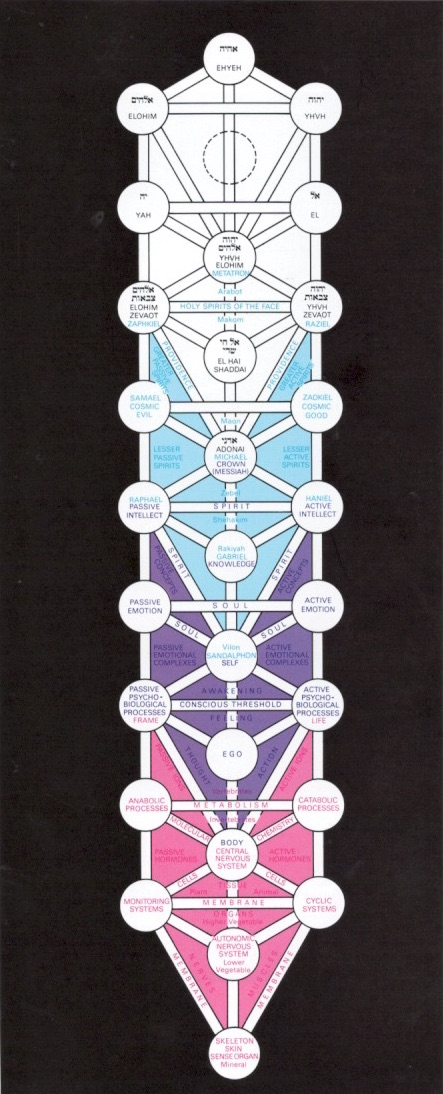The Human Pysche Reproduced from Kabbalah by Warren Kenton, Thames and Hudson, London, 1979. P. 41