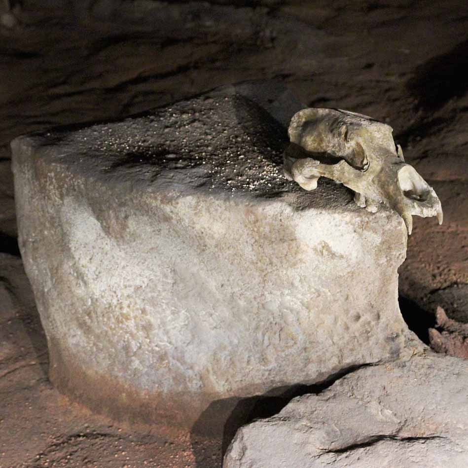 Chauvet Cave: carefully placed bear skull. Photograph by Claude Valette (own work), CC BY-SA 4.0, via Wikimedia Commons