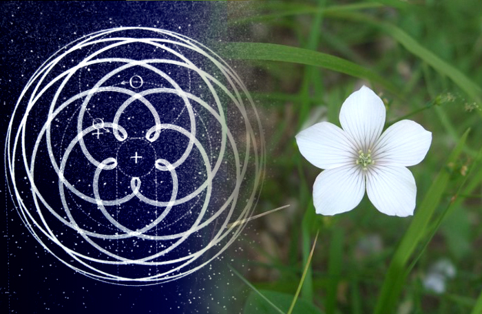 Sacred Number and Its 'Incarnation' through Geometry